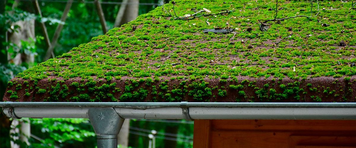 Tvätta tak från mossa och påväxt